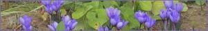 flores-alejandria-granada-gestalt