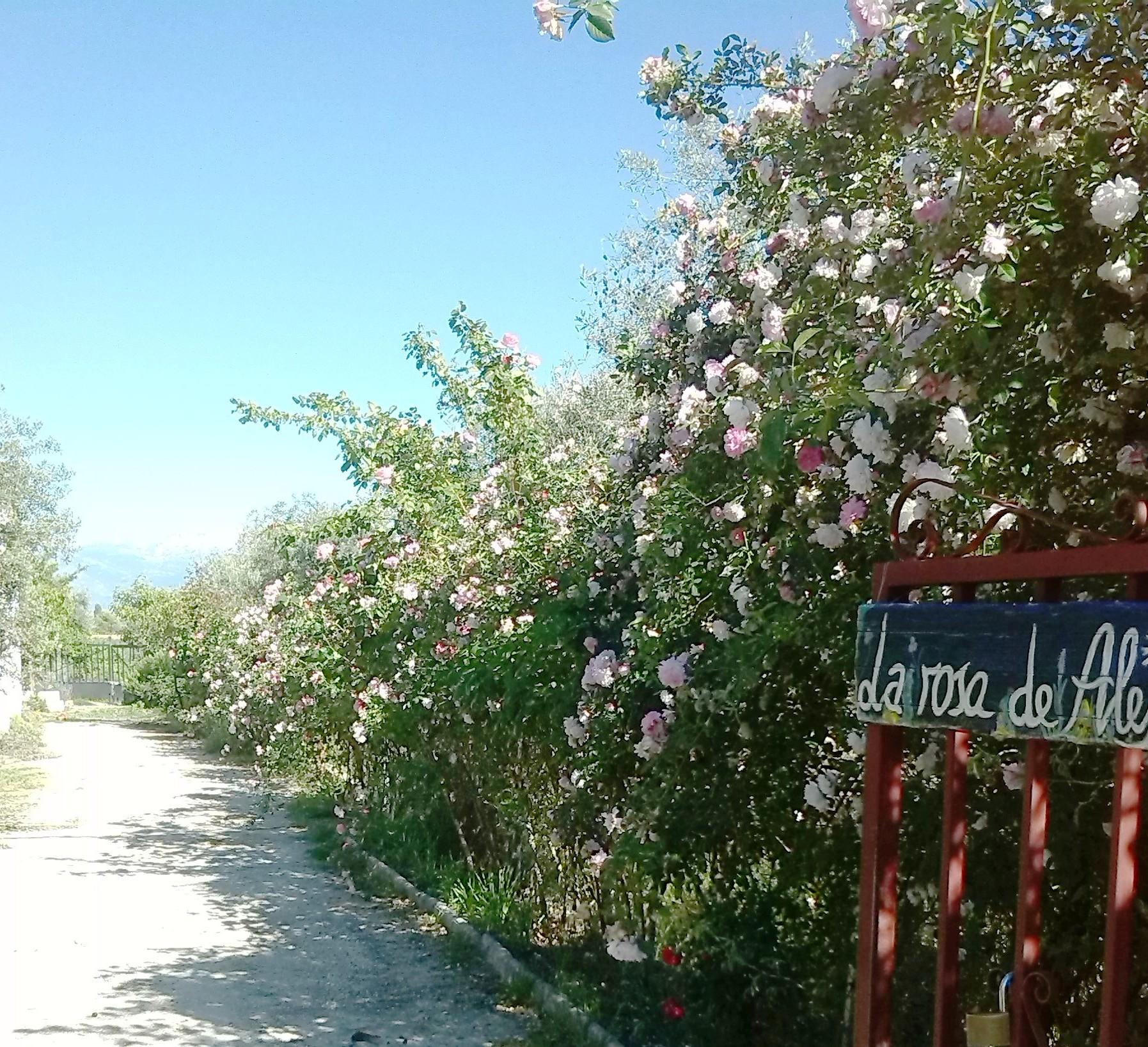 Se hace camino al andar… Talleres de Verano 2014